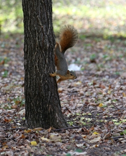 Squirrel Friend - Caddo Trail, Frisco TX (2)