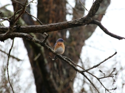 Bird Watching near the Broken Bow Lake in Beavers Bend Park - Photography by Natalia Faulkner (1)