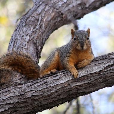 Frisco TX - Wildlife Photography by Natalia Faulkner