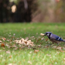 Frisco TX - Nature and Wildlife Photography by Natalia Faulkner (2)