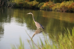 Frisco TX - Wildlife Photography by Natalia Faulkner (16)